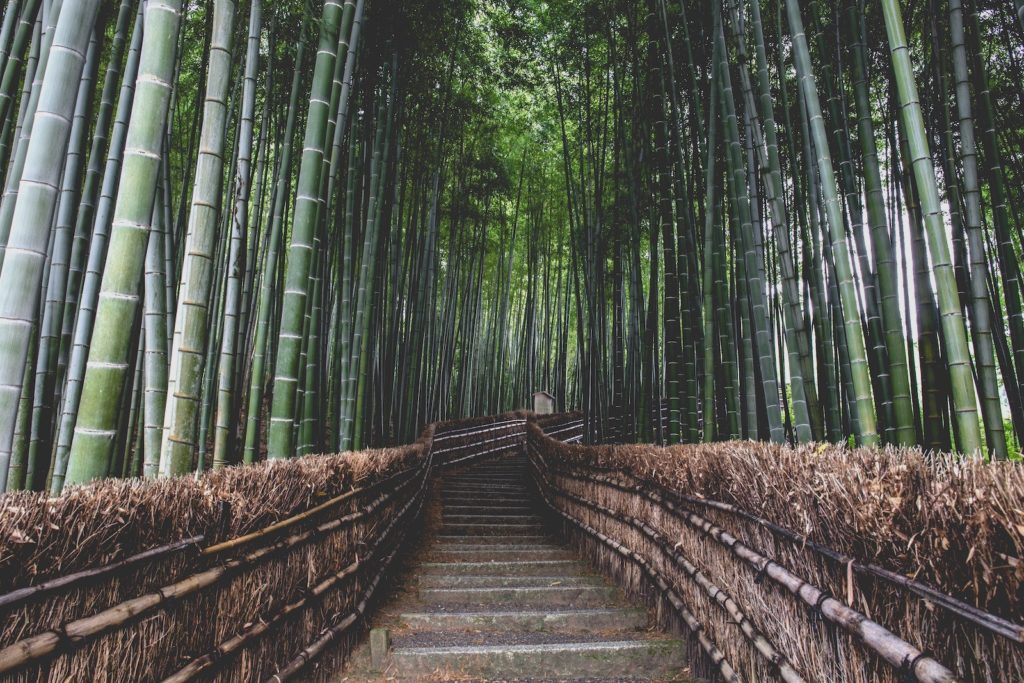 path with stairs and tall green temple bamboo on both sides